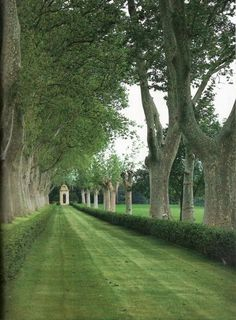 Grass And Plane Trees Make An Avenue In The Garden Of The Century Mas De Pilons Farmstead In Provence, France