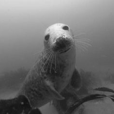 Great seal shot from @wendywallagain. To see your photo here, tag it PADI on Instagram. We'll choose one per day as our featured photo.