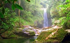 Honduran jungle...