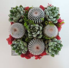 Created in a wooden box this succulent centerpiece has a variety of succulent rosettes and is accented with flowers and colorful moss. This arrangement can be displayed indoors or outside. This is a great way to say 'thinking of you' or 'thank you'! Box measures 7.5 x 7.5 x 4
