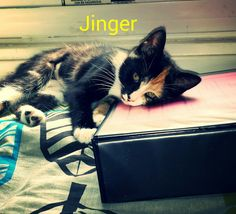 Jinger 3 months old.. my lovely baby