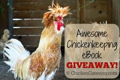 Giveaway: Chicken Hot Topics eBook
