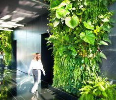 Vertical forest at the MSF office.