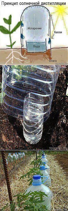 Простой способ саморегулируемого полива при помощи пластиковых бутылок | vparnike.ru