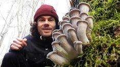 Dieser Pilz kann die Welt retten: Der Austernseitling - Merkmale, Inhal...