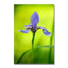 @Overstock - Artist: Lois Bryan  Title: Iris  Product Type: Gallery-wrapped canvas art http://www.overstock.com/Home-Garden/Lois-Bryan-Iris-Canvas-Art/7549602/product.html?CID=214117 $52.99
