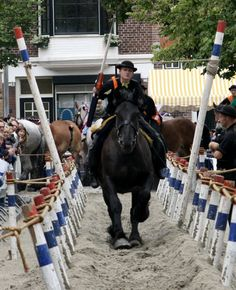 Ringsteken is a folk like traditionat sport at which men, sitting on a horse or from a chariot, try to pierce lance through a ring. Dutch People, Red Light District, Draft Horses, Gentle Giant, Sea Level, People Like, Netherlands, Holland, Amsterdam