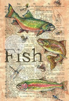 Fish & Flies Mixed Media Drawing on Antique Parchment - flying shoes art studio