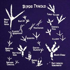 Guide to bird tracks | Infographic.