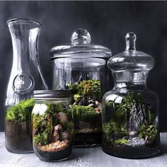 Stylish Bonsai Terrarium Ideas With Miniature Landscaping Jars - Here are few basic bonsai tips to get you going: For the best drainage, use a basic potting mixture of equal parts of peat, loam, and sharp sand. Terrarium For Sale, Bottle Terrarium, Moss Terrarium, Bottle Garden, Ikea Terrarium, Unique Plants, Exotic Plants, Small Plants, Bonsai