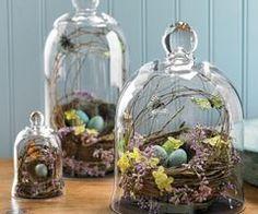 nests under glass cloche