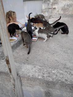 Gatti in colonia
