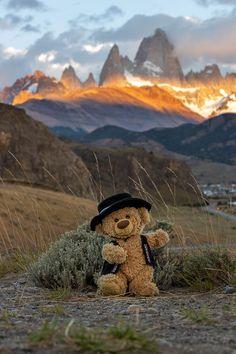 Teddy Bear Pictures, Bear Photos, My Teddy Bear, Cute Teddy Bears, Bear Wallpaper, Scenery Wallpaper, Teddy Hermann, Tedy Bear, Creepy Pictures