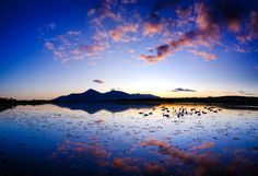 Cisnes se reúnem ao pôr do sol na baía de Dundrum, em County Down, na Irlanda do Norte. Ao fundo estão as montanhas de Mourne, um parque nacional que recebe centenas de turistas todo ano