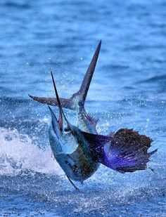 How To Get Started With Salt Water Fishing. Photo by Ricardo's Photography (Thanks to all the fans! Fishing Life, Sport Fishing, Gone Fishing, Salt Water Fish, Salt And Water, Don Corleone, Fauna Marina, Cool Fish, Offshore Fishing