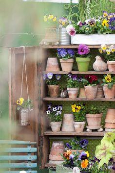 Flower shop: 10 x penséer