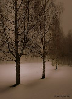 winter trees in sepia Mystical Forest, Pretty Pictures, Pretty Pics, Bare Tree, Winter Beauty, Winter Trees, Winter Wonderland, Wild Flowers, Nature Photography