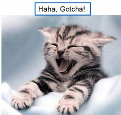 Image detail for -Funny cute cat picture - Funny Photos — JokesPrank