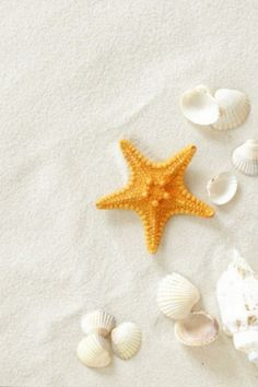 Starfish and shells on the beach - http://universal-wellness.blogspot.com/2015/02/baring-my-soul-and-planting-dream.html