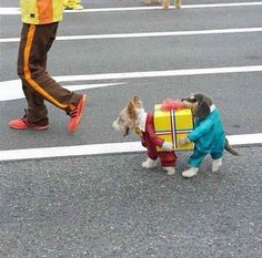 Dog outfit