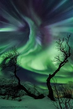 """Spooky Halloween scene in Tromsø, northern Norway. (Credit: Ole C. Salomonsen) The old birch trees reach up with gnarled arms for a strange creature in the sky. Mona Evans, """"Tales of the Northern Lights"""" http://www.bellaonline.com/articles/art2161.asp"""