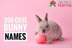 Bunny Names – Most Popular Rabbit Names – My Pet's Name Rabbit Names, Bunny Names, Rabbit Hutch Plans, Rabbit Hutches, Tiny Bunny, Cute Bunny, Cute N Country, Country Girls, Girl Pet Names
