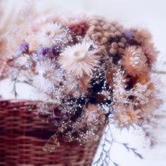 * Dandelion, My Photos, Flowers, Plants, Dandelions, Flora, Plant, Royal Icing Flowers, Flower