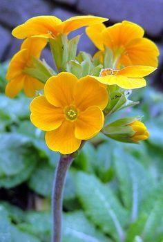 ~~golden flowers by law_keven~~