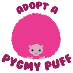 Adopt a Pygmy Puff ☁☁