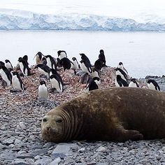 Life at the Poles: Eight Polar Animals That Face the Promise and Peril ...