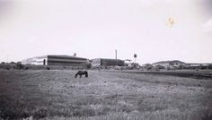 My Dad worked at Mpls Moline when it was in Hopkins Mn. I thought it was funny that the horse is behind the plant.