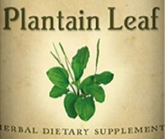 PLANTAIN LEAF Tincture Tonic for Wounds Kidney & Bladder Function Blood Cleaner All Natural Healthy Nutritional Dietary Supplement Herb USA