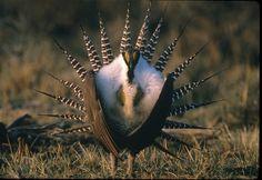 A list of 10 must-see birds in Utah