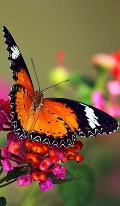"""""""If nothing ever changed, there'd be no butterflies."""" Unknown"""