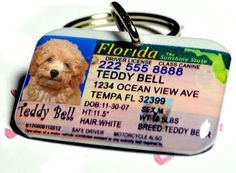 Pet Tags Florida Driver License for cats or dogs by by from on Etsy. Saved to Etsy Treasuries. Cute Dog Tags, Dog Tags Pet, Cute Dogs, Chihuahua Love, Dog Id, Pet Treats, Diy Stuffed Animals, Dog Care, Fur Babies