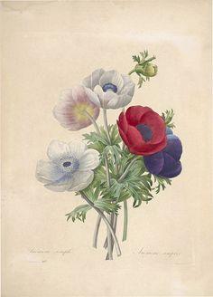 Choix des plus belles fleurs -et des plus beaux fruits par P.J. Redouté. (1833)   por Swallowtail Garden Seeds