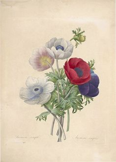 Choix des plus belles fleurs -et des plus beaux fruits par P.J. Redouté. (1833) | por Swallowtail Garden Seeds