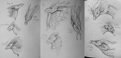hi!!! so in the past few days when i haven't had computer access, I've been working on some studies of the aging heads of every tribe in Wings of Fire!! so far i have these three done, and when i f...