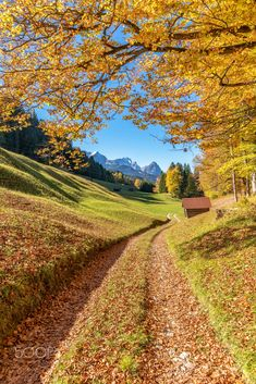 Golden road in autumn (Bavaria, Germany) by Achim Thomae // Goldene Straße im Herbst (Bayern, Deutschland) von Achim Thomae cr.c.