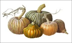 Group of Pumpkins done in watercolor by Susannah Blaxill