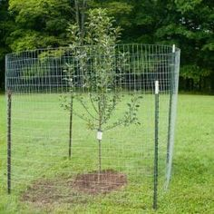 Build a Simple Fence to Protect Fruit Trees From Deer - Hobby Farms Small Fruit Trees, Planting Fruit Trees, Fruit Bushes, Fruit Garden, Edible Garden, Trees To Plant, Veg Garden, Garden Bed, Fence Trees