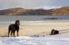 Cathair Dhubh Estate, Lochinver, Sutherland. The Highlands, Scotland. Accepts Dogs. Self Catering. #WeAcceptPets. PetFriendly. Holiday. Travel. Walks. Day Out. Dog Friendly.