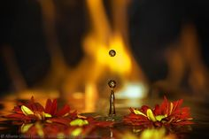 Burning Flowers by Alberto Ghizzi Panizza on 500px