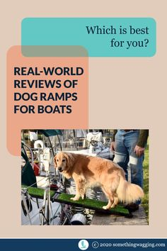 What kind of ramp is least slippery? Most flexible? And which will hold up the best on a boat? Check out the pros and cons of 3 different dog ramps for boats. Dogs On Boats, Living On A Boat, Dog Ramp, Shock Collar, Different Dogs, Kinds Of Dogs, Two Dogs, Pet Travel, Dog Accessories