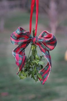 Fresh Mistletoe