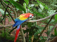 Costa Rica: The Amazing La Paz Waterfall Gardens