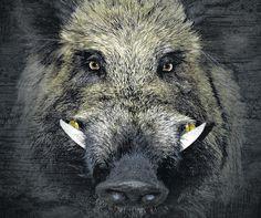 Wild Boars in a school? Wild Boar Hunting, Pig Hunting, Farm Animals, Animals And Pets, Cute Animals, Beautiful Creatures, Animals Beautiful, Photo Animaliere, Mundo Animal