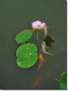 Momma ADORED her Lotus garden
