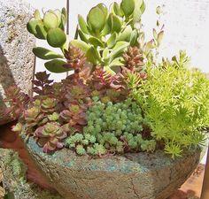 mixed succulent pots - Google Search