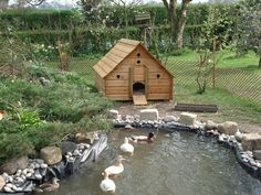 My dream duck area..